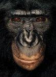 070730_bonobos01_p323.jpg